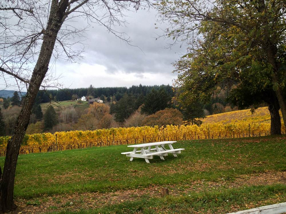 David Hill Vineyard Grounds