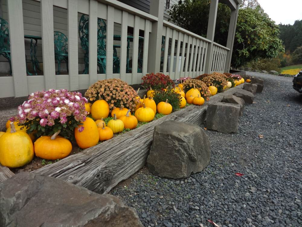 Pumpkins at Shafer Vineyard Cellars