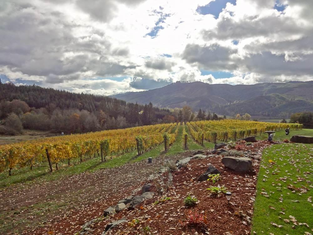 Shafer Vineyard Cellars
