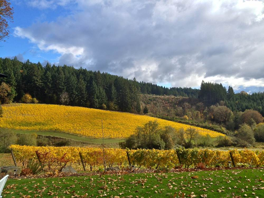 Sunny View of Shafer Vineyard Cellars