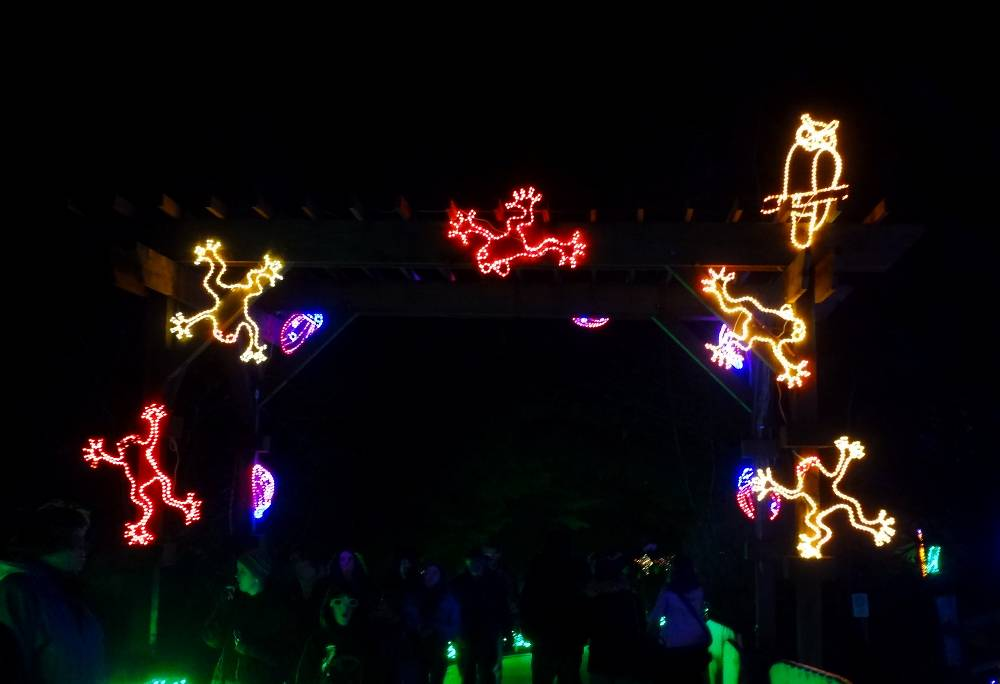 Tree Frog Zoo Lights