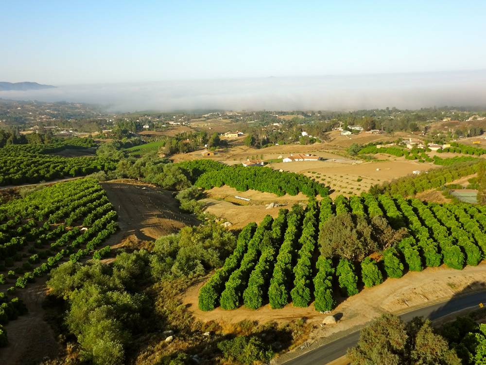 View During a Hot Air Balloon Ride in Temecula Wine Country